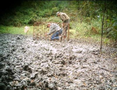 Trapper John and his helper sets up a trap near a hog rooting area.